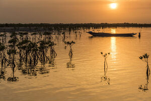 new/20191004 awl 5/africa guinea bissau sunset wetland