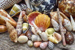 abstract/tropical shell still life