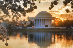 collections/gallo image collection/jefferson memorial cherry blossoms sunrise washington