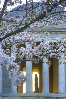 architecture/iconic buildings world thomas jefferson memorial/statue thomas jefferson jefferson memorial cherry