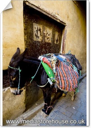 Medina Crop Top: Poster Print Of Africa, Morocco. Fez Morocco A Donkey